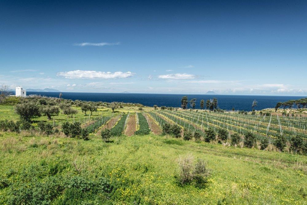 beach-winery1